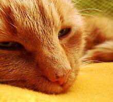 Cat nap by Marina Kropec