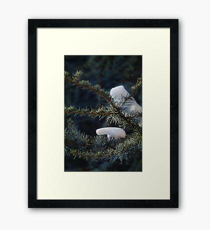 Bears in the trees Framed Print