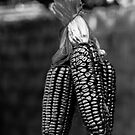 Purple maize, in black and white by Iris MacKenzie