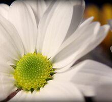White flower by emilyx93