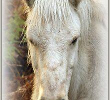 Wild Horse by hanslittel