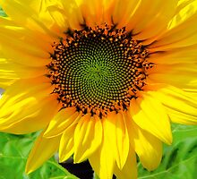 Sunflower by Kathleen   Sartoris
