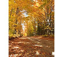 Autumn yellow trees over a back road Photographic Print