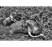 Mammoth and Sabre Toothed Tiger Photographic Print