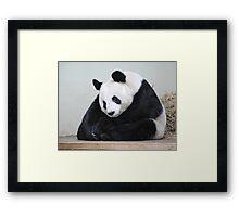 Tian Tian.........Buddha Panda. Framed Print