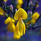 Kelvinside Wildflowers by Glaspark