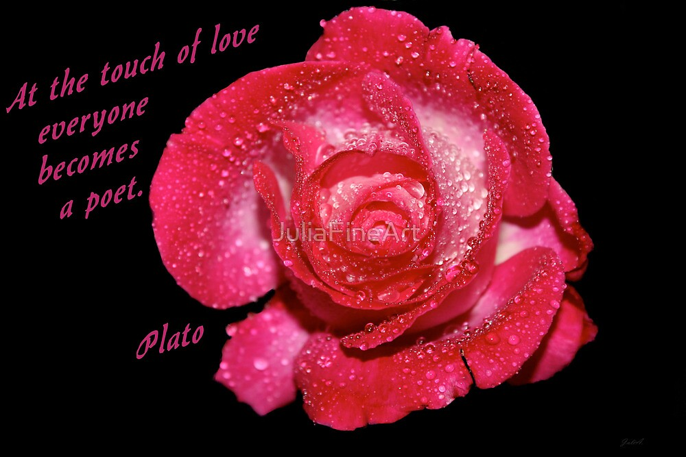 Rose Quote by JuliaFineArt