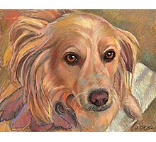 "Sweet Rescue Dog ""Emily"" Photographic Print"