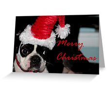 A Boston terrier Christmas Greeting Card