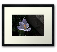 We're All Adults Here Framed Print
