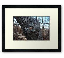 Peek-a-Boo Tree Framed Print