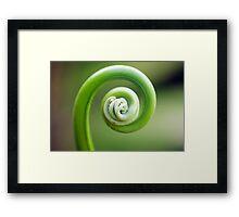 Spirals - fern frond Framed Print