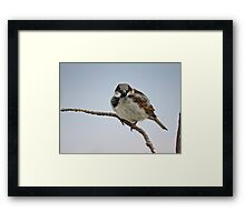 Right Back At You - House Sparrow Framed Print