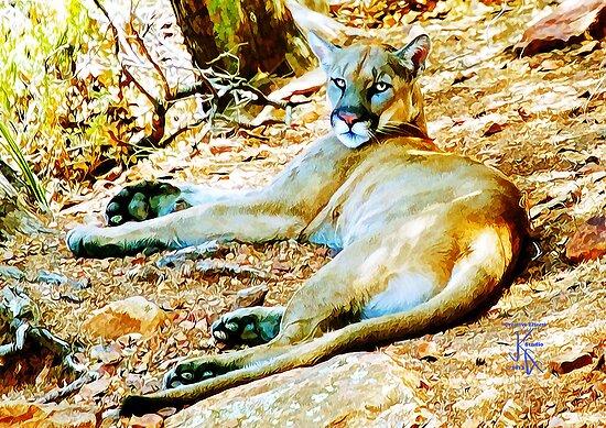 BB Mountain Lion Resting by jkgiarratano