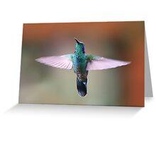 Green Violetear Hummingbird - Costa Rica Greeting Card