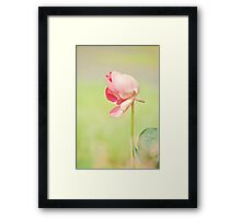 Windswept - lotus flower Framed Print