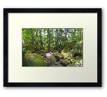 Irrawong Reserve North Narrabeen Framed Print