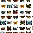 Butterfly Collection by RedPine