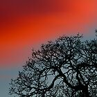 Great Oak by BarryHetschko