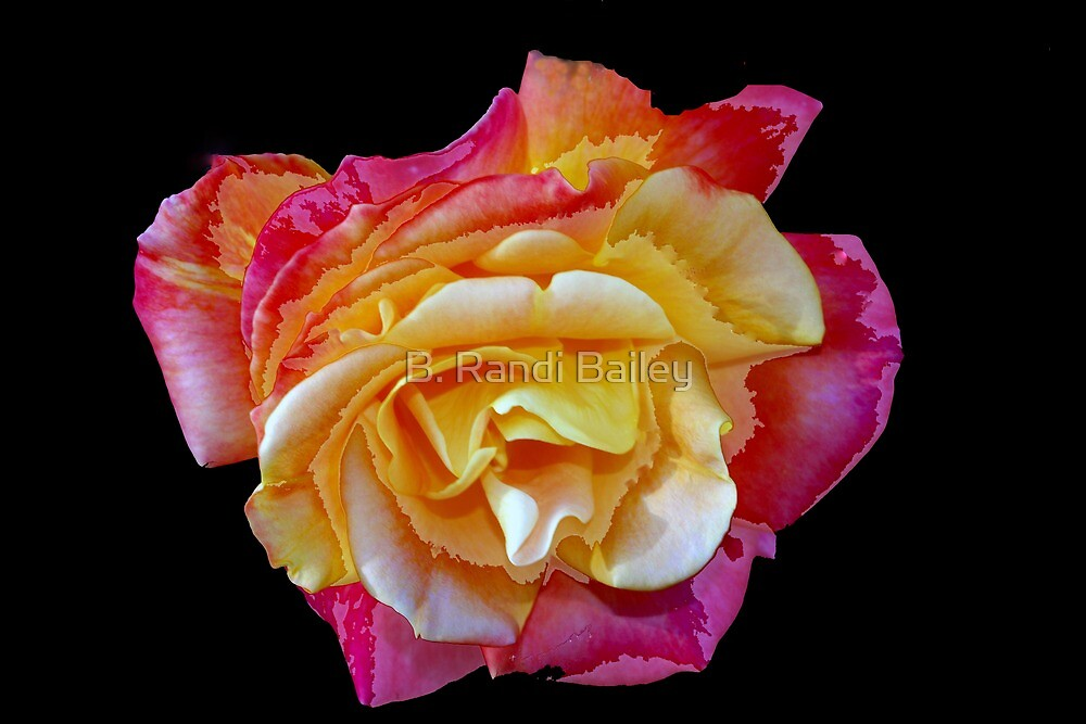 Spitfire rose by ♥⊱ B. Randi Bailey