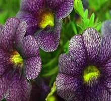 Purple petunias by ♥⊱ B. Randi Bailey