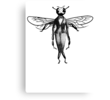 Fly Dressed in Vintage Clothing Canvas Print