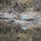 Heron x 2 by pater54