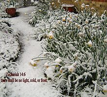 DAFFODILS IN THE SNOW/BIBLE VERSE by Shoshonan