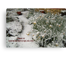 DAFFODILS IN THE SNOW/BIBLE VERSE Canvas Print