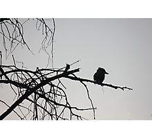 Lone Observer Photographic Print