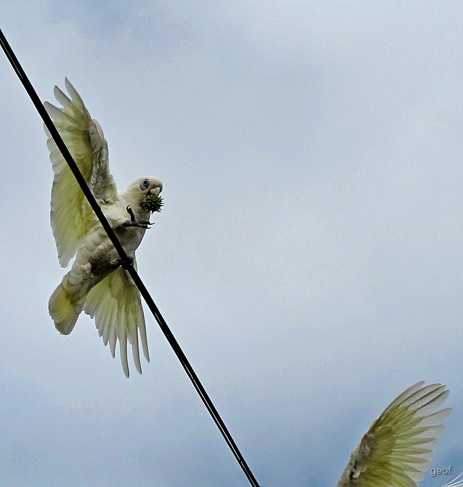 a snack on a wire by geof