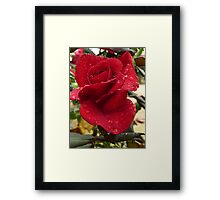 Rose with raindrops Framed Print
