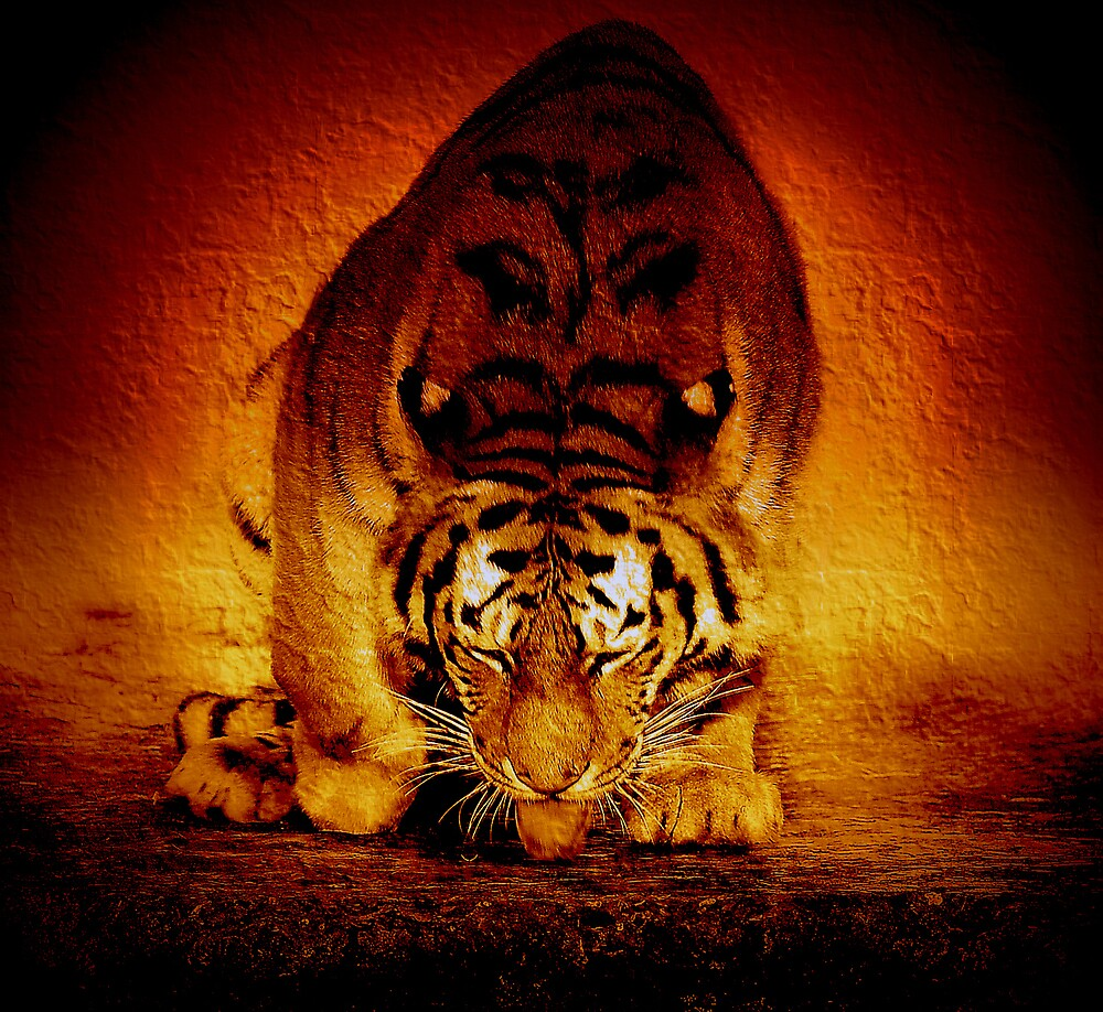 Tiger sunrise by Alan Mattison