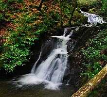 Waterfall, Inistioge, County Kilkenny, Ireland by Andrew Jones