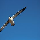 on the wing 2 by Porridgewog32