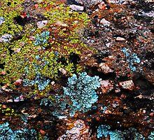 Lichen by Ron Hannah