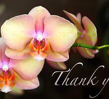 Thank You - Orchids by Megan Schatzman