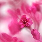 Pink Whisper by KUJO-Photo