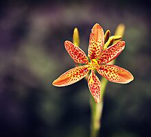 Orange Lily by xuanfairie