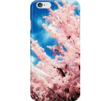 Cherry Blossoms iPhone iPod Case iPhone Case/Skin