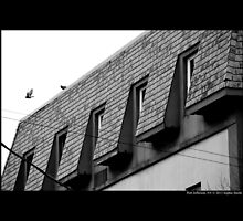 Columbia Livia - Feral Pigeon Flying Of The Building Roof On Main Street - Port Jefferson, New York  by © Sophie W. Smith