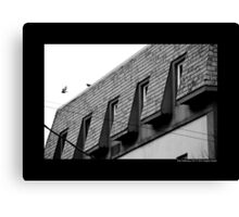Columbia Livia - Feral Pigeon Flying Of The Building Roof On Main Street - Port Jefferson, New York  Canvas Print