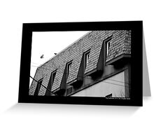 Columbia Livia - Feral Pigeon Flying Of The Building Roof On Main Street - Port Jefferson, New York  Greeting Card
