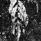 A Silver leaf in Paradise by Odille Esmonde-Morgan