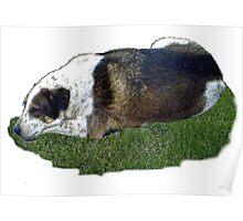 Dog dreamer Poster