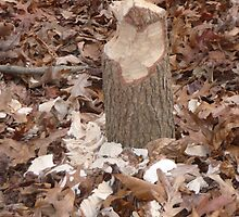 Inefficient beaver cut by nealbarnett