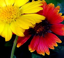 Yellow and red impact by ♥⊱ B. Randi Bailey