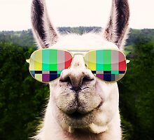 Llama Americana by sm1215