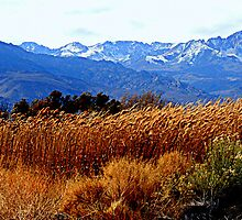 """High Sierra Grass"" by Lynn Bawden"