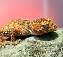 Knob Tailed Gecko Lizard by Deborah  Janke